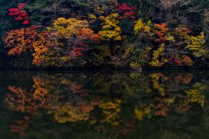 亀山湖のリフレクション ②の写真素材 [FYI04782920]