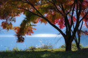 奥多摩湖 / 早朝の紅葉の写真素材 [FYI04782928]