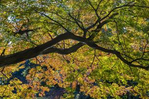 小石川後楽園 / 紅葉と木の陰影の写真素材 [FYI04782932]