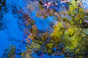 小石川後楽園 / 紅葉のリフレクションの写真素材 [FYI04782934]