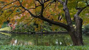 小石川後楽園 / 紅葉と水辺の写真素材 [FYI04782936]