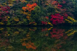 亀山湖のリフレクション ②の写真素材 [FYI04782963]