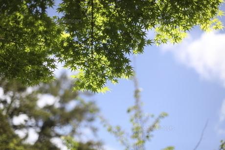 青空と新緑の写真素材 [FYI04783012]