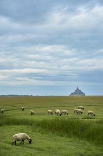 羊と世界遺産モンサンミッシェル、のどかな風景の写真素材 [FYI04783168]