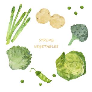 春野菜の水彩イラストセットのイラスト素材 [FYI04783213]