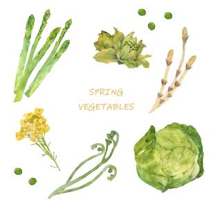 春野菜の水彩イラストセットのイラスト素材 [FYI04783214]