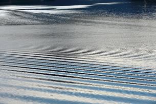 岐阜県 揖斐川町 水紋がきれいな徳山ダム湖の朝の写真素材 [FYI04783469]