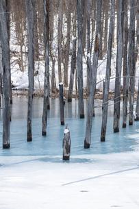 雪が溶け始めた早春の青い池の写真素材 [FYI04783481]