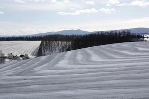 融雪剤がまかれた雪の畑の写真素材 [FYI04783483]