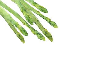 グリーンアスパラの水彩イラストのイラスト素材 [FYI04783580]