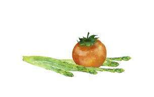 トマトとグリーンアスパラの水彩イラストのイラスト素材 [FYI04783581]