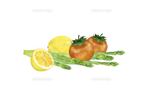 トマトとアスパラとレモンの水彩画のイラスト素材 [FYI04783583]