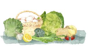 春野菜と卵の水彩イラストのイラスト素材 [FYI04783586]