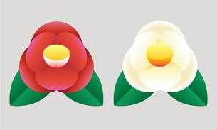 赤と白の椿のイラスト素材 [FYI04783596]