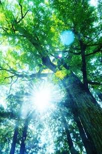 光を浴びる木の写真素材 [FYI04783712]