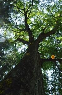 下から見た木の写真素材 [FYI04783713]