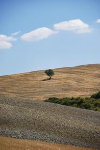 ポツンとした一本の木と大地、シンプルな風景イメージの写真素材 [FYI04783718]