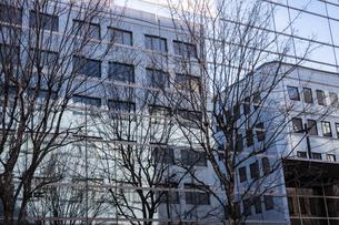 ガラスに反射するビルと枯れ木の写真素材 [FYI04783777]