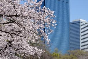 桜と大阪ビジネスパークの写真素材 [FYI04783849]