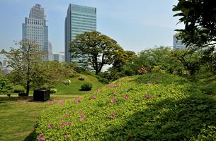 旧芝離宮恩賜庭園・築山と高層ビルの写真素材 [FYI04783919]