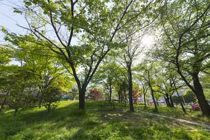 新緑の公園の木陰の写真素材 [FYI04783976]