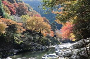 秋の清滝の写真素材 [FYI04784312]
