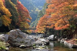 秋の清滝の写真素材 [FYI04784322]