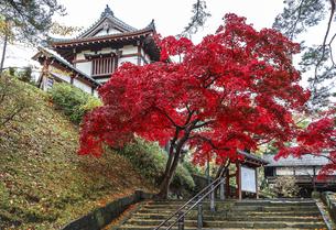 紅葉の樹木越しに見る久保田城表門風景の写真素材 [FYI04784344]