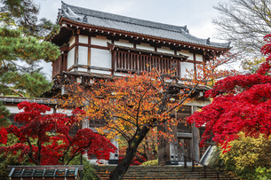 紅葉の樹木越しに見る久保田城表門の写真素材 [FYI04784348]