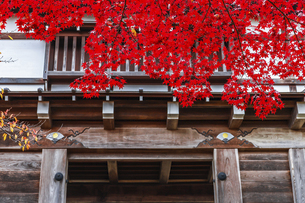 紅葉の枝葉越しに見る久保田城表門の写真素材 [FYI04784350]