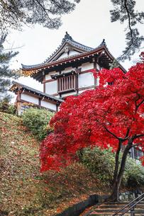紅葉の樹木越しに見る久保田城表門の写真素材 [FYI04784352]