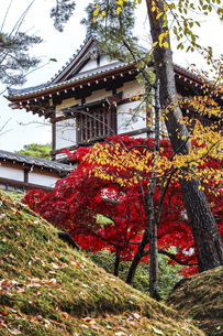 紅葉の樹木越しに見る久保田城表門の写真素材 [FYI04784354]