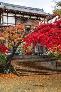 紅葉の樹木越しに見る久保田城表門の写真素材 [FYI04784356]