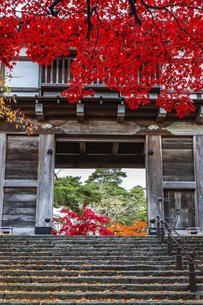 紅葉の枝葉越しの久保田城表門風景の写真素材 [FYI04784358]