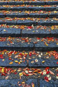 紅葉した落ち葉を見る石段の写真素材 [FYI04784363]