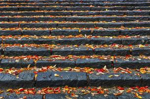 紅葉した落ち葉を見る石段の写真素材 [FYI04784365]
