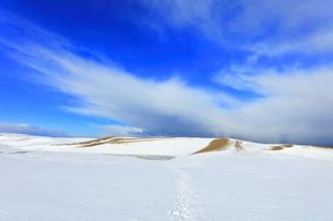冬の鳥取砂丘雪景色の写真素材 [FYI04784386]