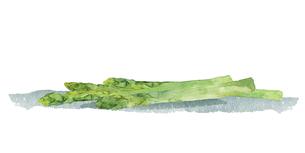 グリーンアスパラの水彩イラストのイラスト素材 [FYI04784389]