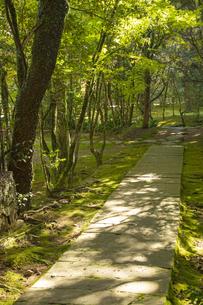 秋の立田自然公園の写真素材 [FYI04784441]