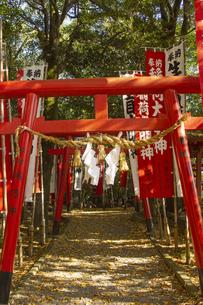 菊池神社の写真素材 [FYI04784443]