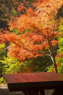紅葉の光が反射するテーブルの写真素材 [FYI04784444]