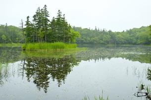新緑の知床五湖 二湖の写真素材 [FYI04784480]