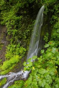 十勝川原流域 無名の滝の写真素材 [FYI04784487]