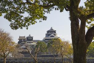 熊本地震で被災した熊本城の写真素材 [FYI04784500]