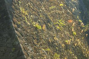 熊本地震で被災した熊本城の写真素材 [FYI04784502]