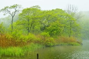新緑のポロト湖畔の森の写真素材 [FYI04784511]