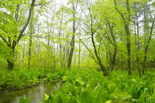 新緑のポロト自然休養林の森の写真素材 [FYI04784512]