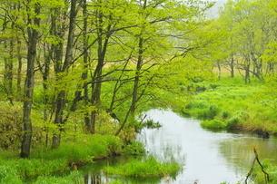 新緑の美々川上流の森の写真素材 [FYI04784515]