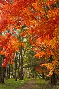 秋の立田山の写真素材 [FYI04784516]