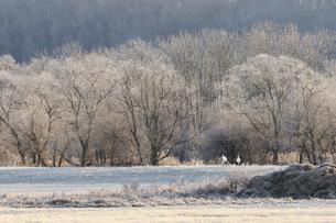 初霜の朝の写真素材 [FYI04784625]